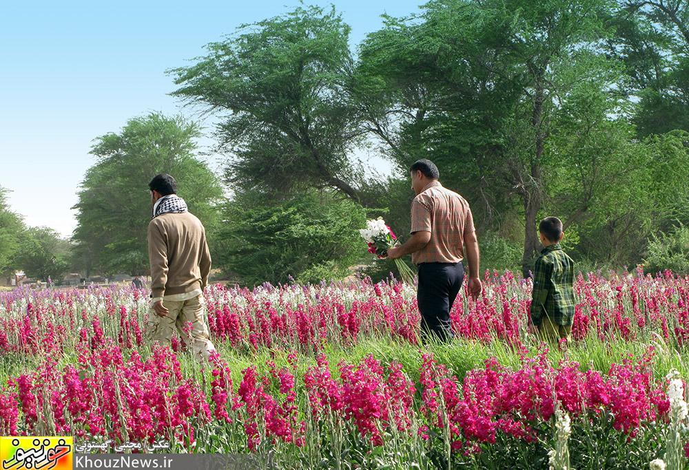 باغ گل در حمیدیه خوزستان